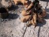 la cuisson des moules au feu de bois