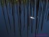 feuille et bambous